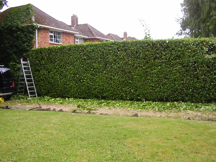 Gallery lawn mowing auckland for Auckland landscaping services