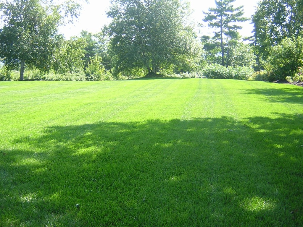 Lawn mowing auckland for Auckland landscaping services