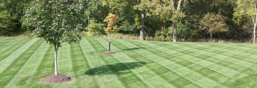 Lawn Mowing Services Auckland